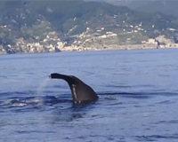 delfiniamalfi